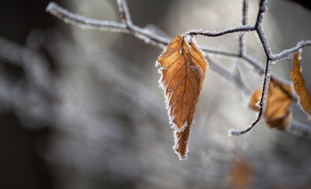 葉の浅いフォーカス