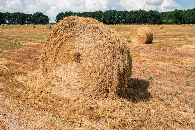 収穫後の畑の干し草の山