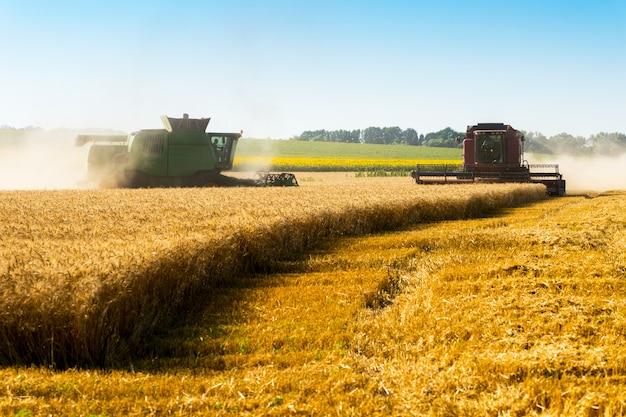 Два комбайна в поле для сбора урожая пшеницы