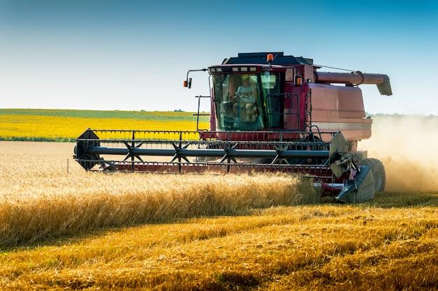 Комбайн на пшеничном поле, зеленый комбайн уборки полевых культур