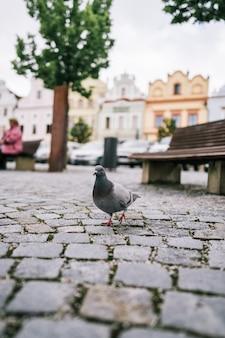 Голубь гуляет по земле на площади