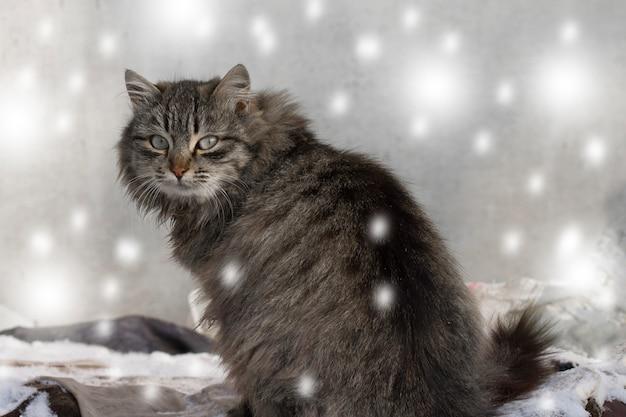 冬に雪の中で野外を歩いている猫
