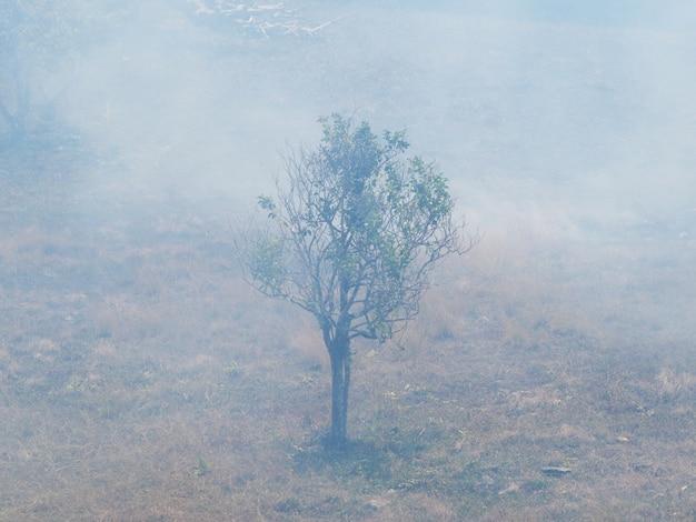 草と木を燃やす