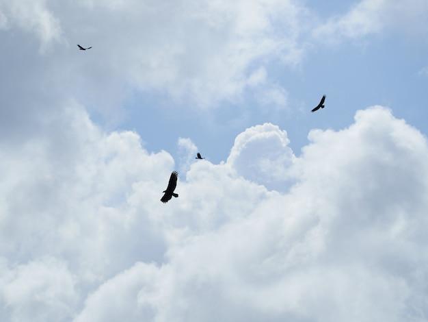 空の雲の下を飛んでいるワシのシルエット
