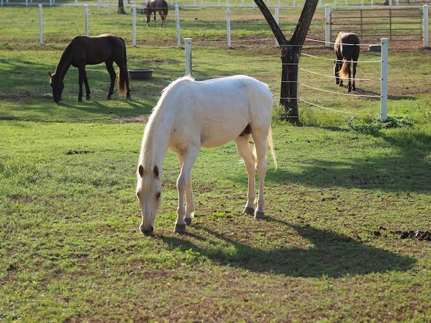 牧場の美しい馬。牧場の美しい茶色と白の馬