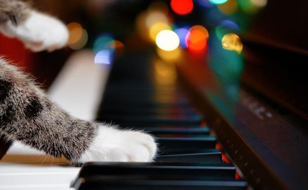 Кошка играет на пианино, крупным планом лапы кота на пианино, мягкие белые ноги кота