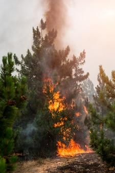 森林火災。山火事、汚染、大量の煙の後に燃やされた木
