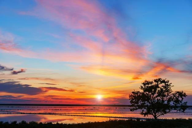 湖に沈む夕陽の前の木のシルエット