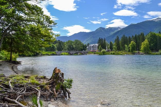 切り株と興味深い巻き根を持つ山の湖と海岸。