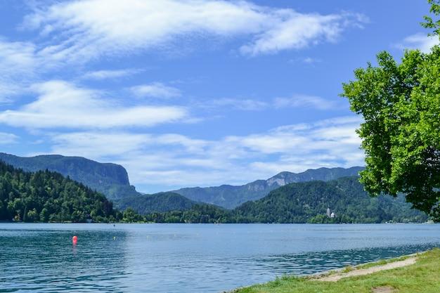 野生動物。晴れた日に山の湖