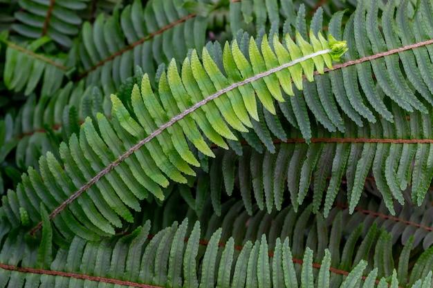 Конец-вверх зеленой листвы папоротника в природе. летняя концепция отдыха и релаксации.