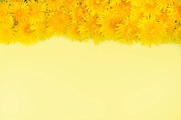 黄色のタンポポが黄色の背景の上に並んでいます。フレーム。春や夏の気分。