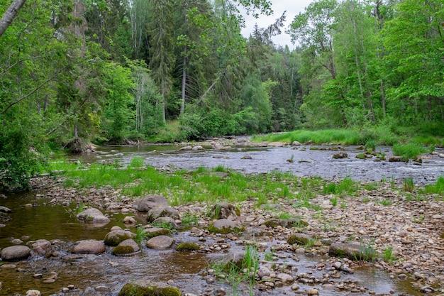 Каменный берег реки. ручей со скалистым берегом.