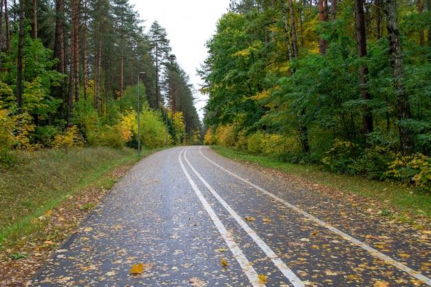 Асфальтовая дорога в лиственном лесу.