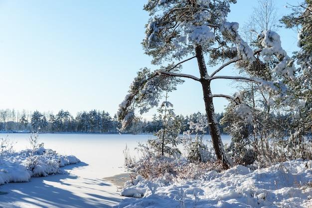 雪に覆われた冷凍植物、冬の森
