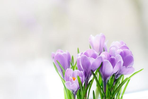 クロッカスの繊細な花束が窓辺に咲きました。閉じる、
