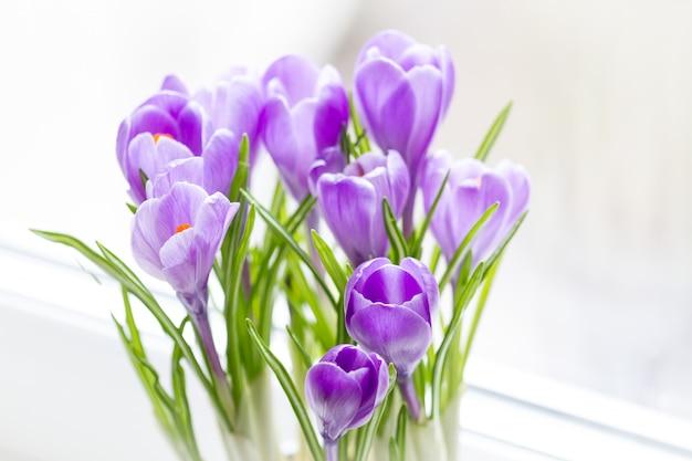 クロッカスの繊細な花束が窓辺に咲きました。クローズアップ、セレクティブフォーカス