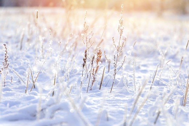 Зимний фон, утренний мороз на траве с копией пространства