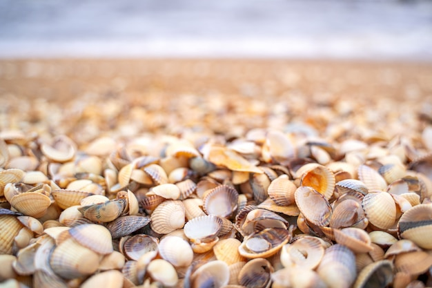 Морская волна бежит к побережью от маленьких раковин в скане, швеция