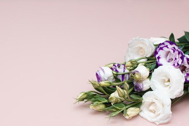 ピンクの背景の新鮮な花のフレーム。白と紫のトルコギキョウ
