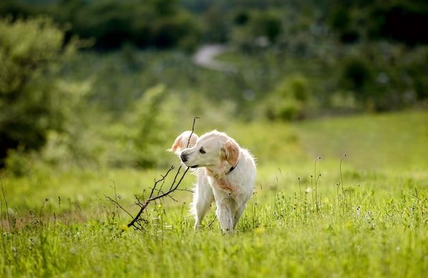 Милая собака, сидящая на цветущем поле