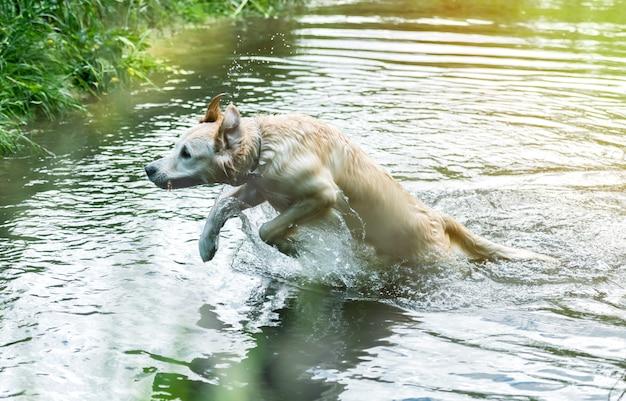 Прекрасная собака весело в реке