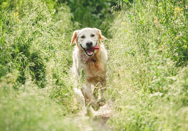 Смешная собака работает на солнечном лугу