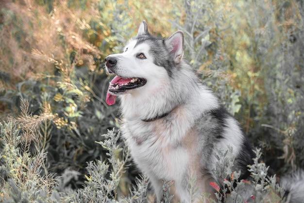 Милая собака в высокой траве