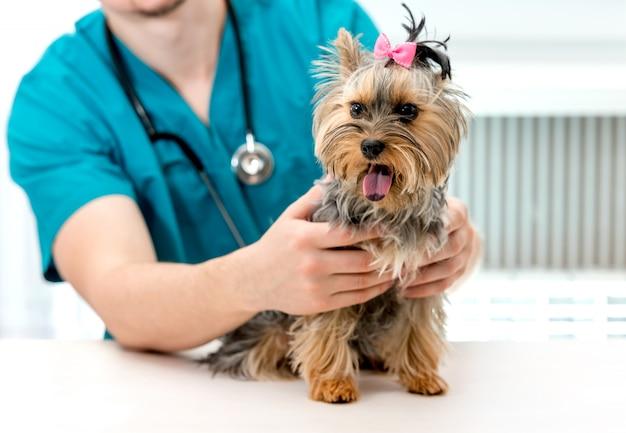 獣医の医者は獣医クリニックで診察台に犬を保持します。