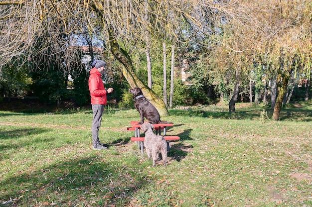 Молодой человек, обучение послушанию со своими собаками холодным осенним утром.