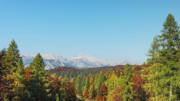 高山の秋の森と山の岩の範囲の眺め。