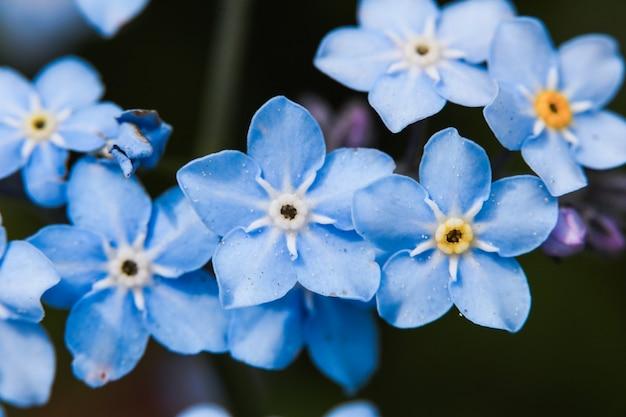 草原の植物の背景、青い小さな花