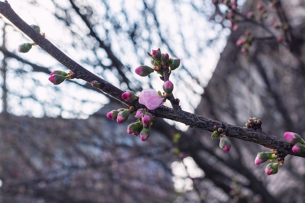 Весенние цветущие цветы на бранче крупным планом