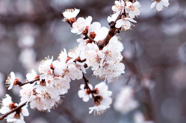 Весенние листья и цветущие цветы