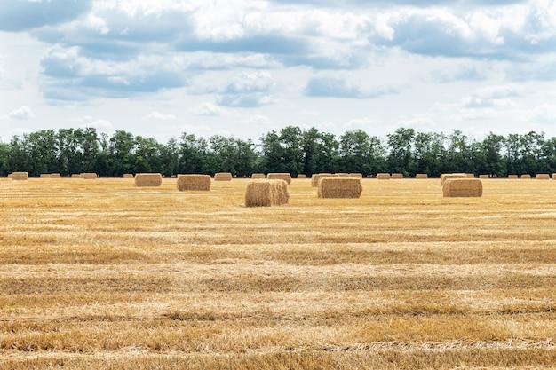 干し草の山で収穫された穀物穀物小麦穀物畑
