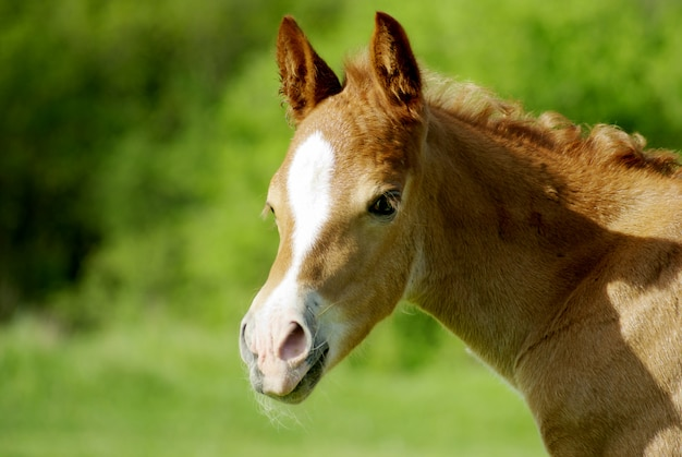 子馬の肖像