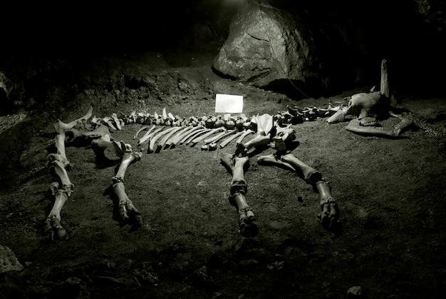 Древний скелет