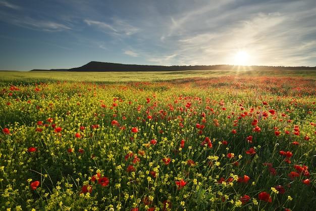 牧草地の春の花。