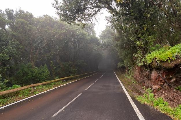 木々、テネリフェ島、アナガに囲まれた空の道