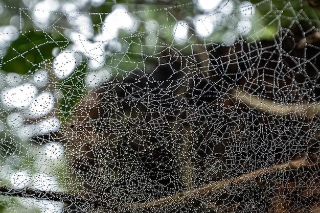 森の中の水滴を持つクモの巣