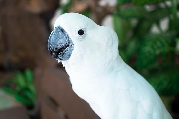 Портрет красивого белого попугая какаду, милая птица, крупным планом фото.