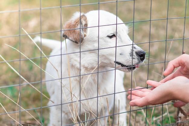 ペットの避難所で犬と遊ぶ人の手。バーの後ろに悲しい子犬、孤独な犬。犬小屋、野良犬。檻の中の動物。人々は動物のコンセプトが大好きです。男は犬を養子に