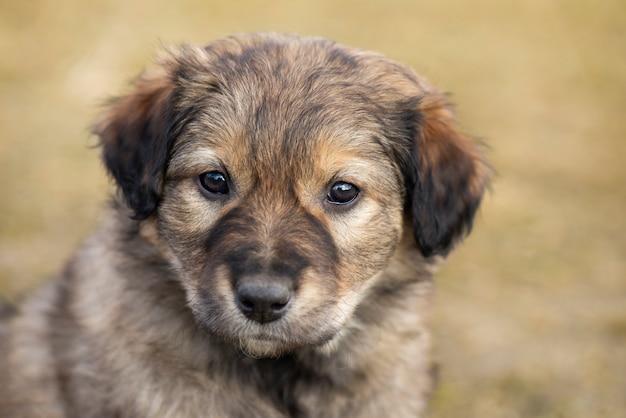 かわいい雑種の子犬