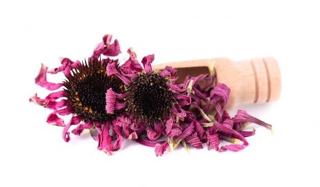 Сушеные цветы эхинацеи на деревянной ложкой