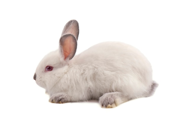 Белый маленький кролик на белом фоне