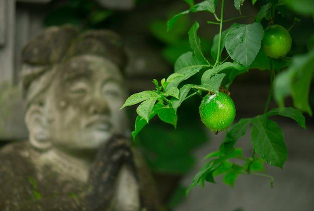 祈っている彫刻の女性の背景の木にライムグリーンが育つ