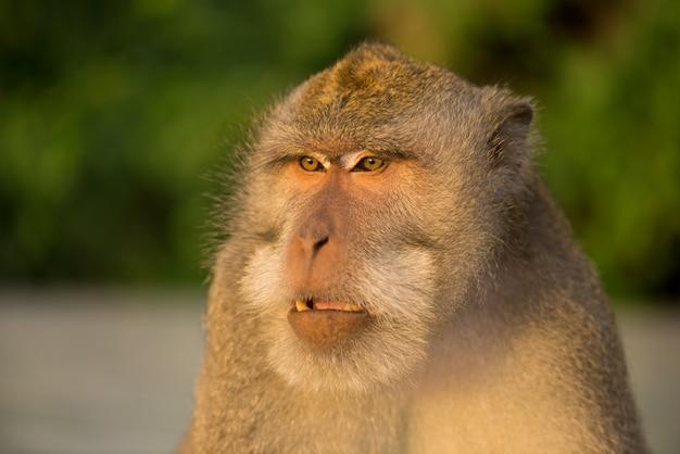森の中の木の上に座っている大人の猿