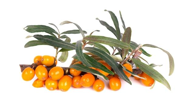 シーバックソーン。白で隔離される葉を持つ新鮮な熟した果実