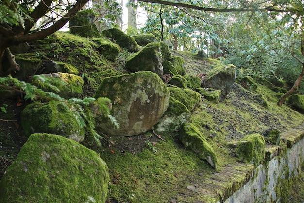 石の上の緑の苔