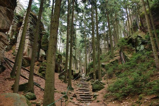 森の石の階段